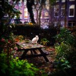 white cat garden