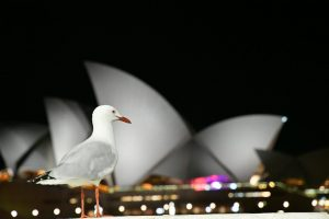 sydney opera house being spied on by a bird